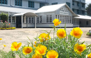 Park Green Tea Factory