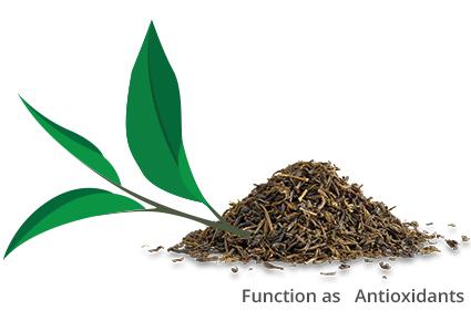 Wat maakt thee een gezonde drank?