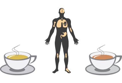 Heeft verse thee meer gezondheidsvoordelen dan niet zo verse thee?